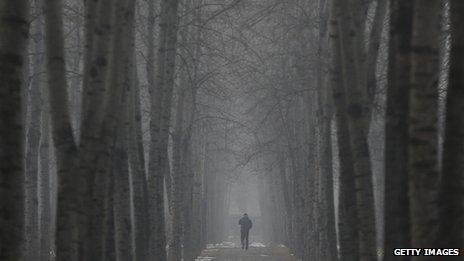 A man wearing a mask walks under the trees during severe pollution on January 23, 2013 in Beijing.