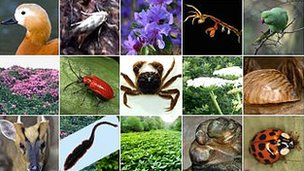 Mosaic of invasive non-native species (Image: BBC)