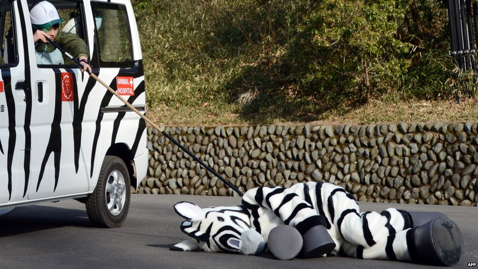 BBC News - In pictures: Japan's unusual emergency drill at Tama Zoo