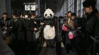A woman wearing a panda costume prepares to board a train
