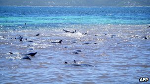 Pod of dolphins off south coast of Western Australia - 2 February