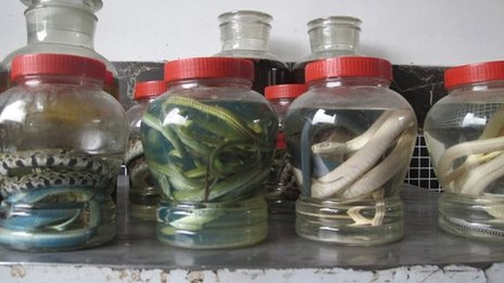 Snakes in jars