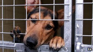 Dog in a kennel at Manchester dogs home