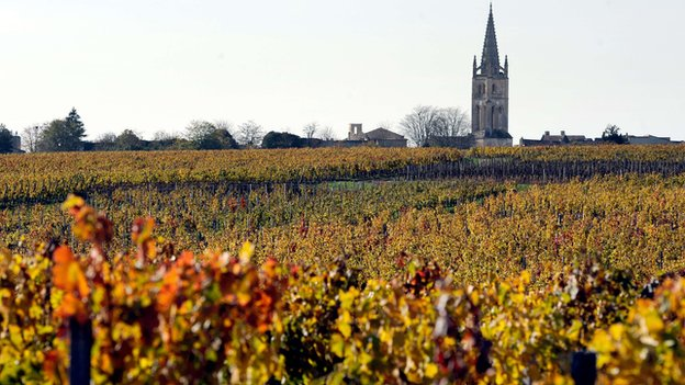 Vineyard in Saint-Emilion, near Bordeaux, south-western France