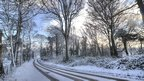 A road running through tall trees. The whole scene is covered in snow and looks pretty.