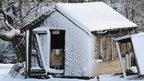 A sheep looks out from its snow covered shed in Penistone, South Yorkshire.