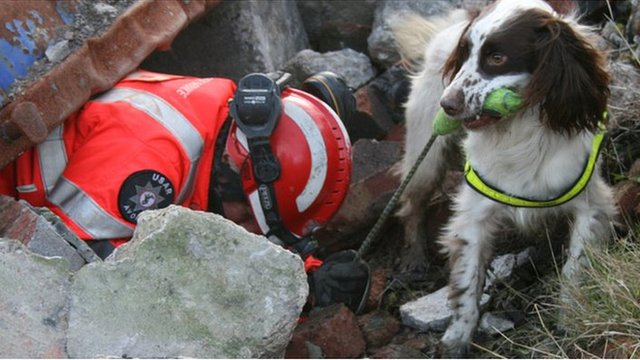 Search And Rescue Dog Training Northern Ireland