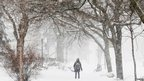 A woman walks through snow in a winter storm in Toronto, 8 Feb