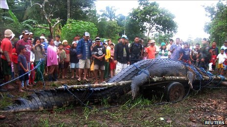 21ft (6.4m) saltwater crocodile, which is suspected of having
