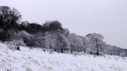 A snow covered scene of trees on a slope.
