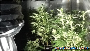 Cannabis factory in West Bromwich