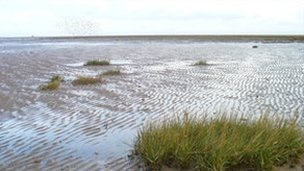 Salt marsh (generic)