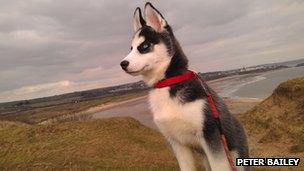 Peter Bailey's dog, Maisy