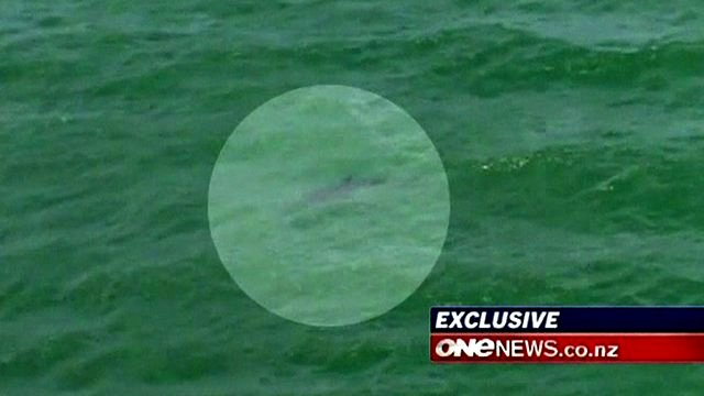 Aerial footage shows shark