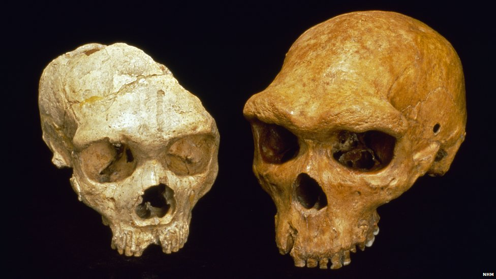 Neanderthal (l) and Homo heidelbergensis skulls