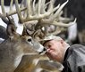Sonny Engle looks at a display of deer mounts