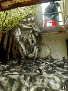 Cod in a fishing boat