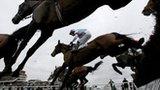 Horse racing at Cheltenham