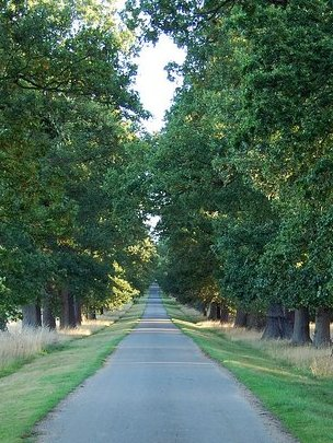 Oak-lined avenue (Image: BBC)