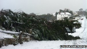 Tree fallen in Fermain Road in snow - picture courtesy Louisa Partridge