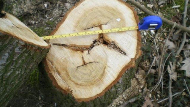 A tree stump at the Bernard Matthews site