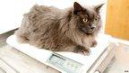 Cat weight loss.