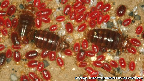 how to avoid bringing bed bugs to your new home