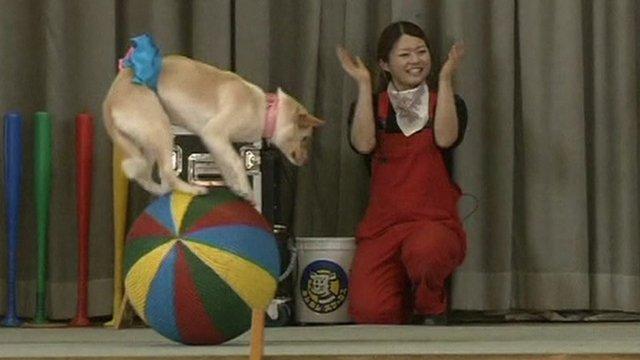 Dog circus performs in Japan
