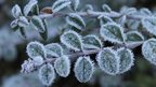 A close up shot of a branch with leaves, covered in frost.