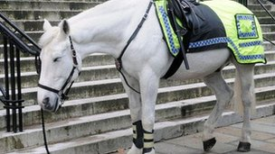 Picture of police horse tweeted by officers