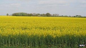 Farm land at Newborough