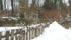 A garden surrounded by a fence and tall trees is covered in lots of snow.
