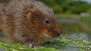 Water voles scupper cycle path