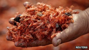 Man holds dead prawns