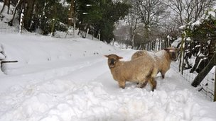 Sheep in County Antrim were shivering in the freezing conditions