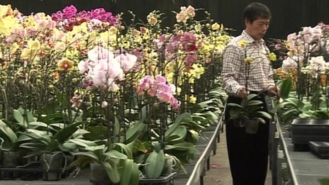 Orchid greenhouse, Taiwan