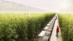 Houweling&#039;s Tomatoes greenhouse