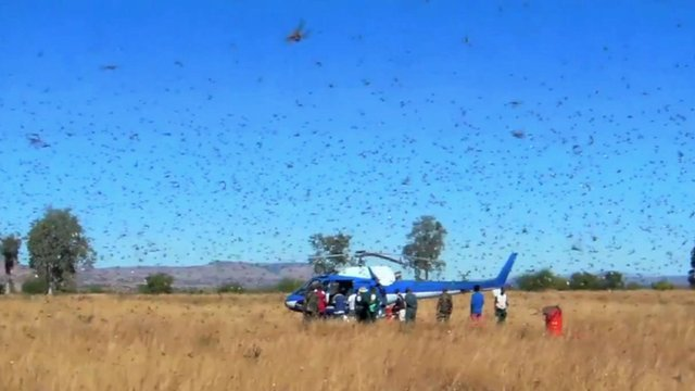 Helicopter in field, surrounded by locusts
