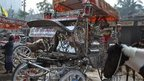 In pictures: Dhaka's declining horse and carriage tradition