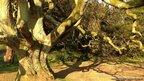 Tree in Dyffryn gardens