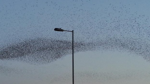 Starlings over Swindon