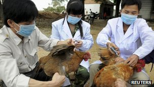 Technical staff from the animal disease prevention and control center inject chickens with the H5N1 bird flu vaccine in Shangsi county, Guangxi Zhuang autonomous region, 3 April 2013