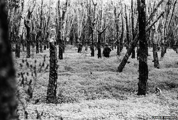 US soldiers patrol through a ghostly, defoliated rubber tree plantation