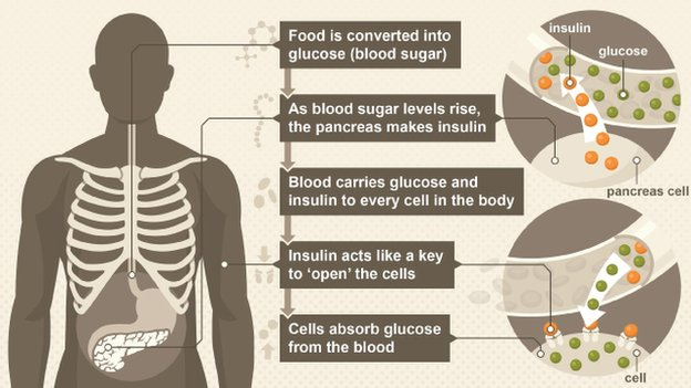 How the body controls blood sugar levels