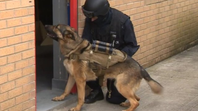 Canine crime-fighter Elvis of Durham Police