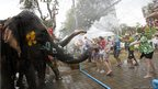 Elephants spray water at tourists in celebration of the Songkran water festival