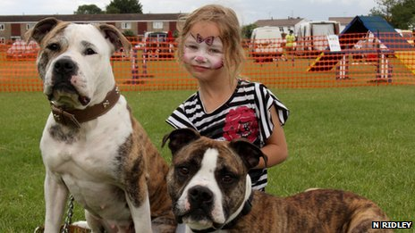 A young girl with two Staffordshire bull terriers