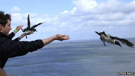 Man releasing seabird into wild