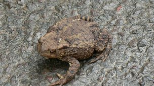 A toad on a road.