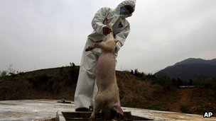 A health worker lowers dead pigs into a processing pit, where the carcasses will be fermented into organic fertilizers, at a hog farm in Zhuji city, in eastern China's Zhejiang province, 21 March 2013